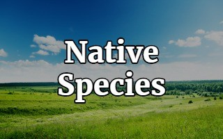 Native Species